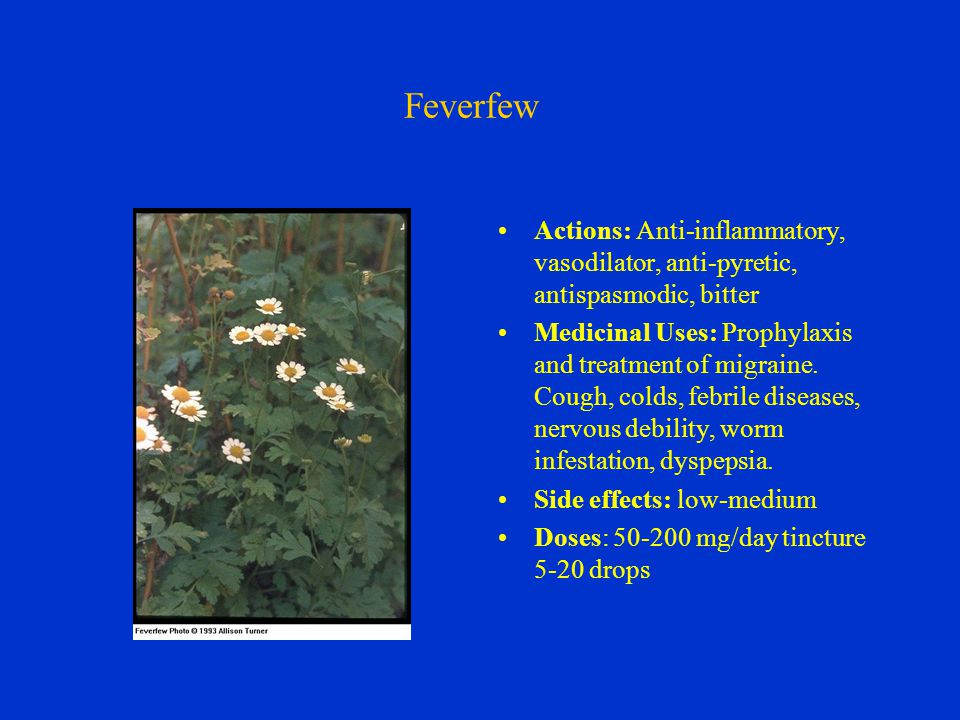 Feverfew Actions: Anti-inflammatory, vasodilator, anti-pyretic, antispasmodic, bitter Medicinal Uses: Prophylaxis and treatment of migraine.
