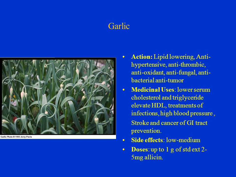Garlic Action: Lipid lowering, Anti- hypertensive, anti-thrombic, anti-oxidant, anti-fungal, anti- bacterial anti-tumor Medicinal Uses: lower serum cholesterol and triglyceride elevate HDL, treatments of infections, high blood pressure, Stroke and cancer of GI tract prevention.
