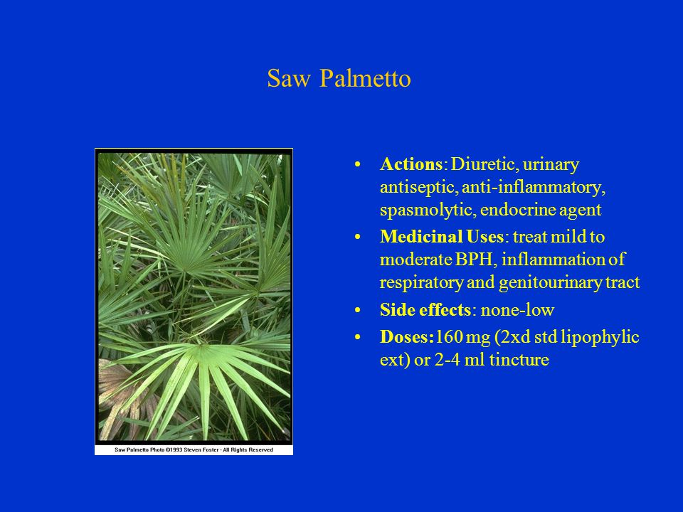 Saw Palmetto Actions: Diuretic, urinary antiseptic, anti-inflammatory, spasmolytic, endocrine agent Medicinal Uses: treat mild to moderate BPH, inflammation of respiratory and genitourinary tract Side effects: none-low Doses:160 mg (2xd std lipophylic ext) or 2-4 ml tincture