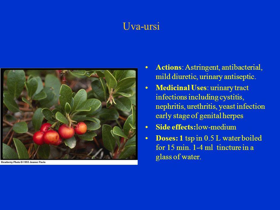 Uva-ursi Actions: Astringent, antibacterial, mild diuretic, urinary antiseptic.