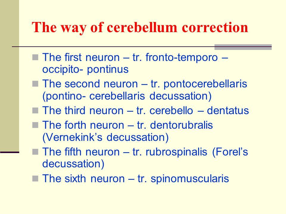 The way of cerebellum correction The first neuron – tr. fronto-temporo – occipito- pontinus The second neuron – tr. pontocerebellaris (pontino- cerebe