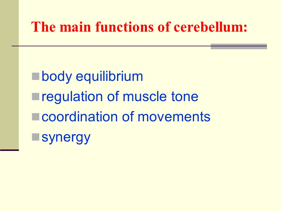 The main functions of cerebellum: body equilibrium regulation of muscle tone coordination of movements synergy