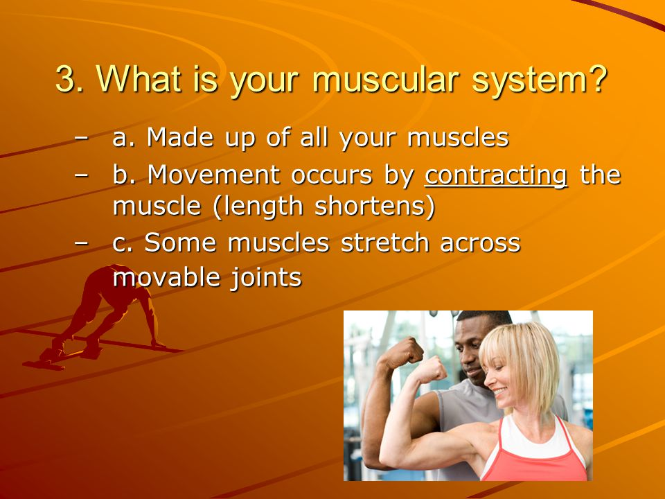 3.What is your muscular system. –a. Made up of all your muscles –b.