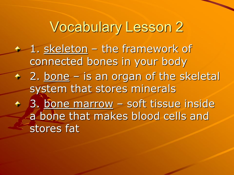 Vocabulary Lesson 2 1. skeleton – the framework of connected bones in your body 2. bone – is an organ of the skeletal system that stores minerals 3. b