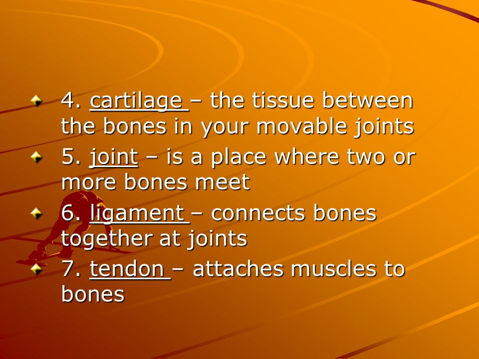 4. cartilage – the tissue between the bones in your movable joints 5. joint – is a place where two or more bones meet 6. ligament – connects bones tog