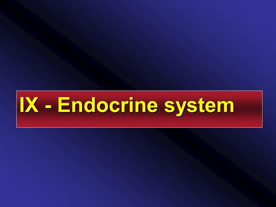 IX - Endocrine system