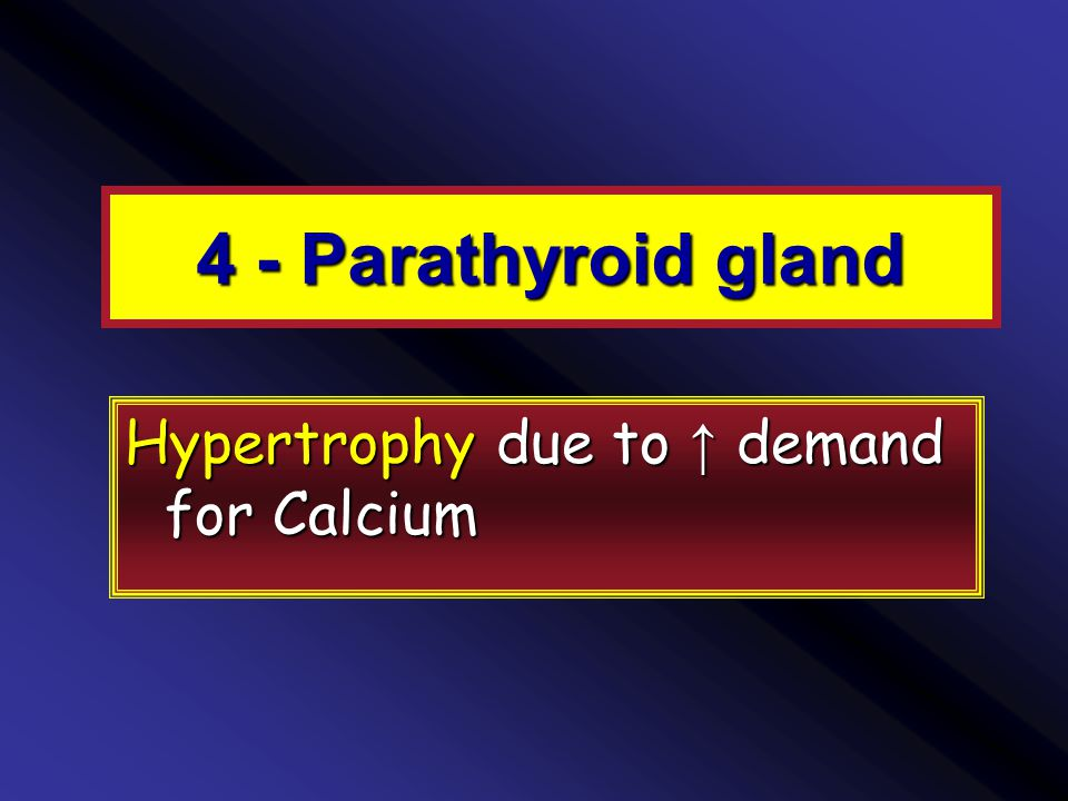 4 - Parathyroid gland Hypertrophy due to ↑ demand for Calcium