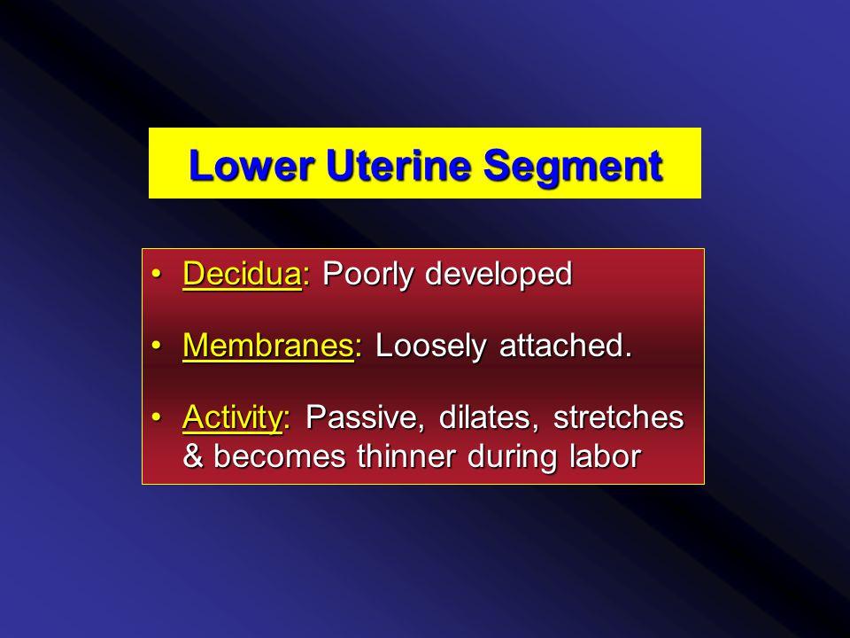Lower Uterine Segment Decidua: Poorly developedDecidua: Poorly developed Membranes: Loosely attached.Membranes: Loosely attached.