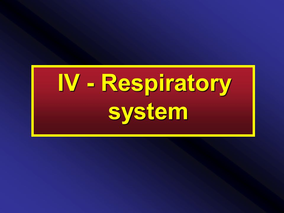 IV - Respiratory system