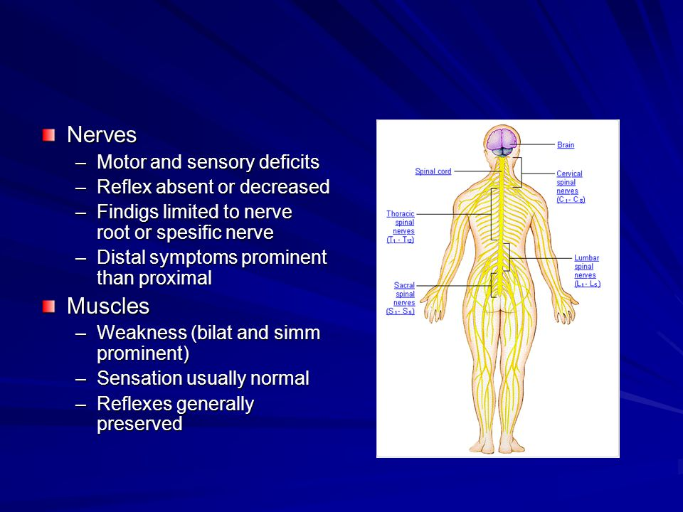 Nerves –Motor and sensory deficits –Reflex absent or decreased –Findigs limited to nerve root or spesific nerve –Distal symptoms prominent than proximal Muscles –Weakness (bilat and simm prominent) –Sensation usually normal –Reflexes generally preserved