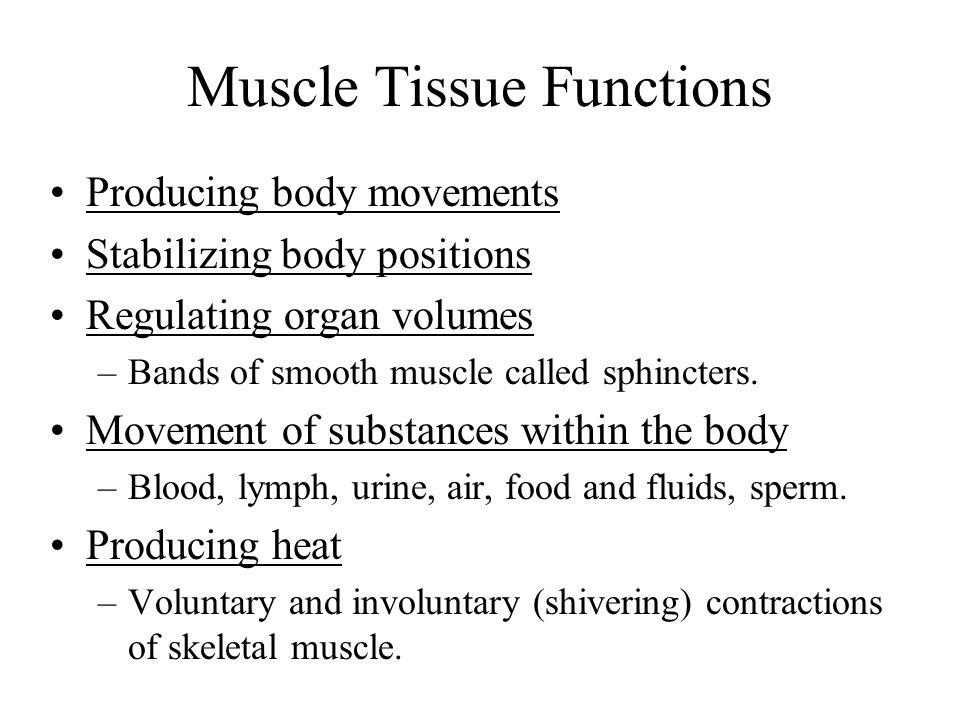 Bone Fascicle Tendon Deep fascia Skeletal muscle Epimysium Perimysium Muscle fiber (cell) Perimysium Endomysium Muscle fiber (cell) Myofibril