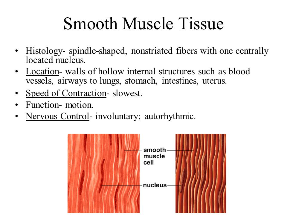 Filaments and Sarcomeres Thick (myosin) and thin (actin) filaments overlap each other in a pattern that creates striations.