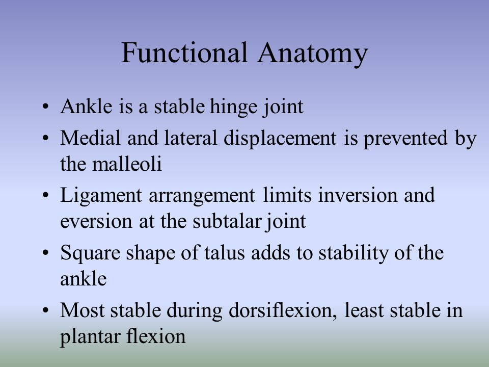 Functional Anatomy Ankle is a stable hinge joint Medial and lateral displacement is prevented by the malleoli Ligament arrangement limits inversion an