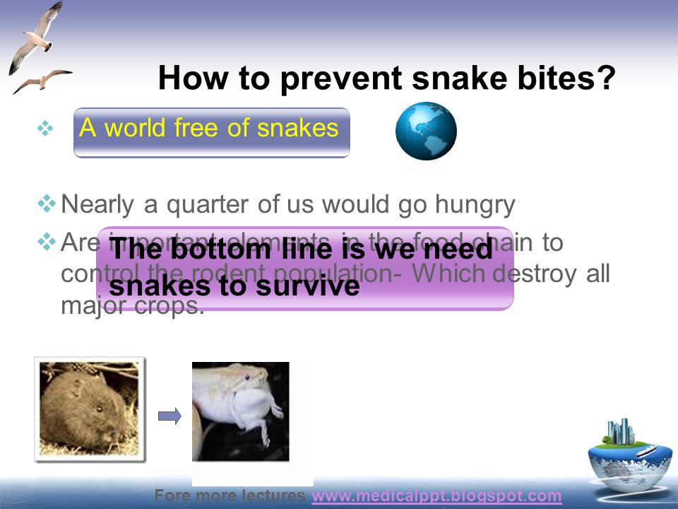 Fore more lectures www.medicalppt.blogspot.comwww.medicalppt.blogspot.com Epidemiology  India estimates in the region of 200,000 bites and 15-20,000 snake bite deaths per year  Originally made in the last century, are still quoted.