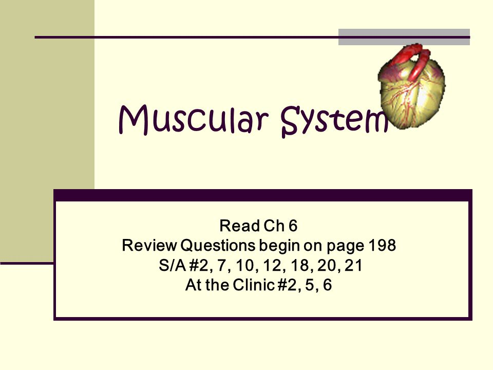 Muscular System Read Ch 6 Review Questions begin on page 198 S/A #2, 7, 10, 12, 18, 20, 21 At the Clinic #2, 5, 6