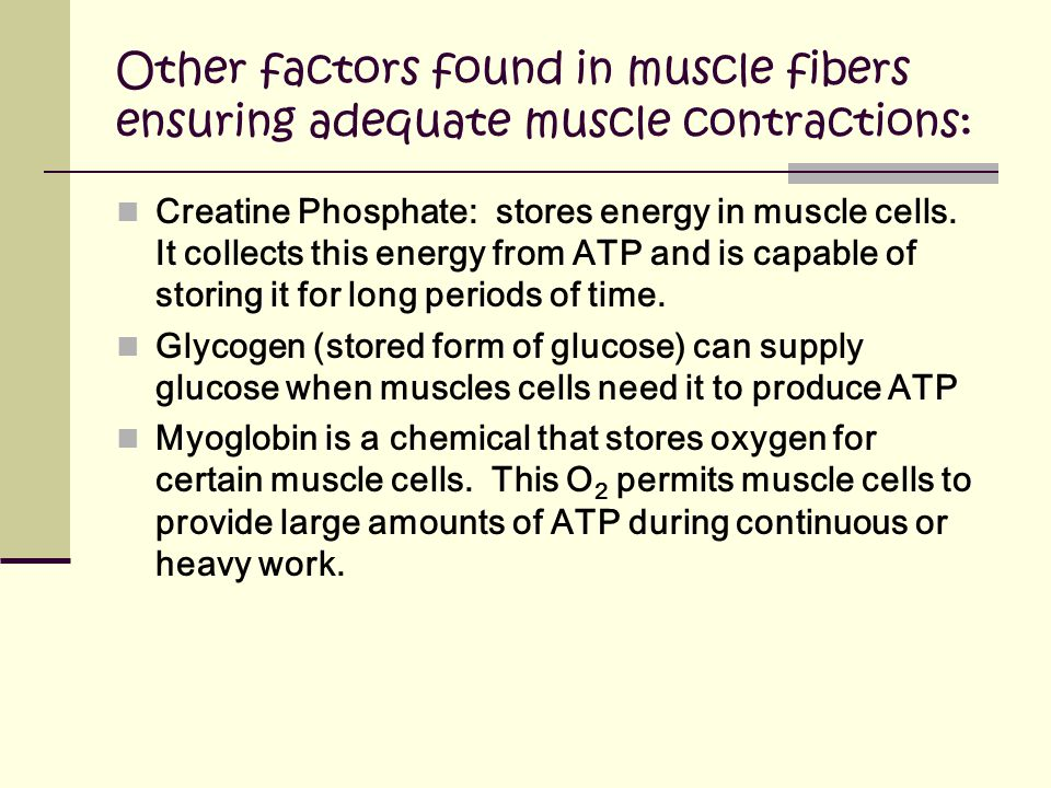 Other factors found in muscle fibers ensuring adequate muscle contractions: Creatine Phosphate: stores energy in muscle cells.