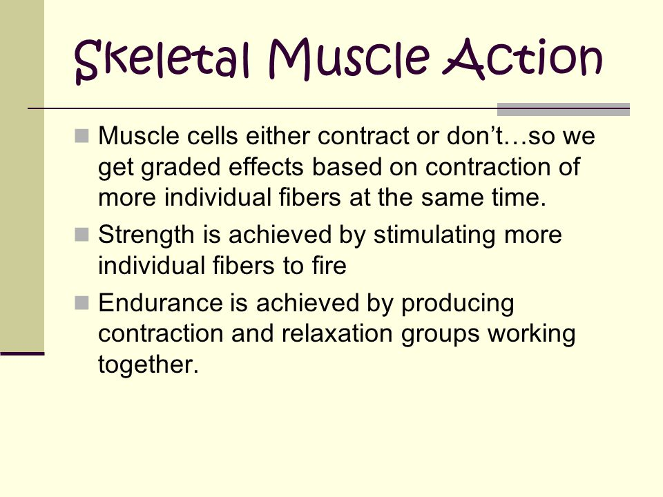 Skeletal Muscle Action Muscle cells either contract or don't…so we get graded effects based on contraction of more individual fibers at the same time.