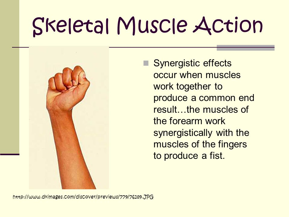 Skeletal Muscle Action Synergistic effects occur when muscles work together to produce a common end result…the muscles of the forearm work synergistically with the muscles of the fingers to produce a fist.