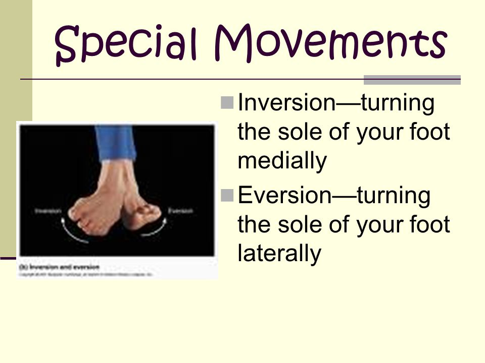 Special Movements Inversion—turning the sole of your foot medially Eversion—turning the sole of your foot laterally