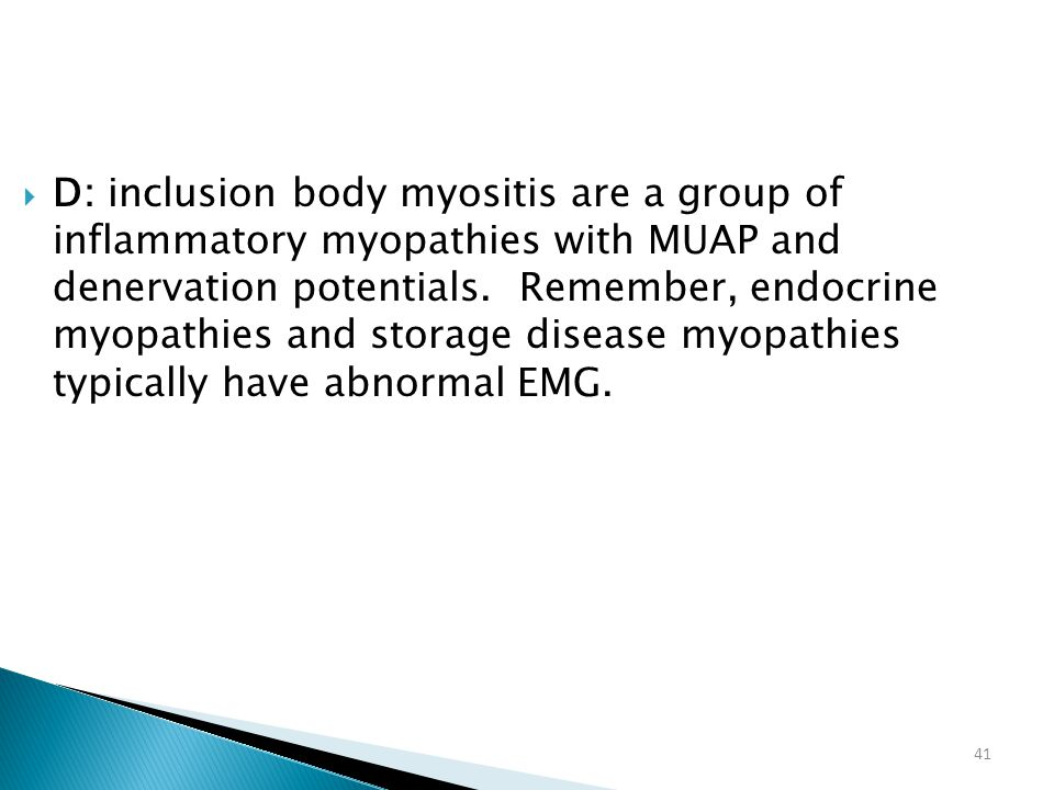 41  D: inclusion body myositis are a group of inflammatory myopathies with MUAP and denervation potentials. Remember, endocrine myopathies and storag
