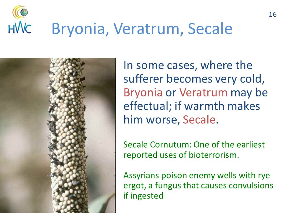 Copyright HWC 2014 May be reproduced with proper citation Bryonia, Veratrum, Secale In some cases, where the sufferer becomes very cold, Bryonia or Veratrum may be effectual; if warmth makes him worse, Secale.