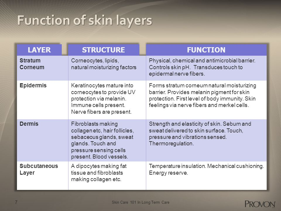 Skin Care 101 In Long Term Care 7 Function of skin layers