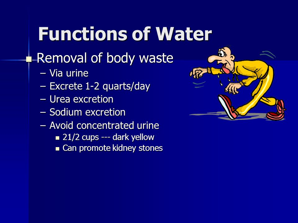Functions of Water Removal of body waste Removal of body waste –Via urine –Excrete 1-2 quarts/day –Urea excretion –Sodium excretion –Avoid concentrate