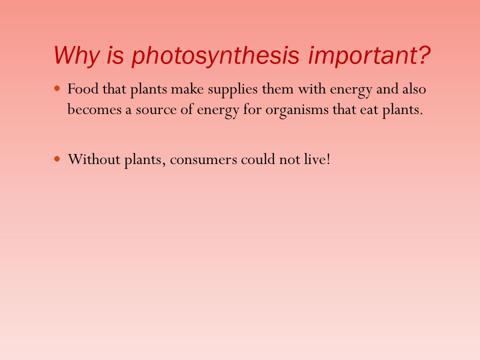 Food that plants make supplies them with energy and also becomes a source of energy for organisms that eat plants.
