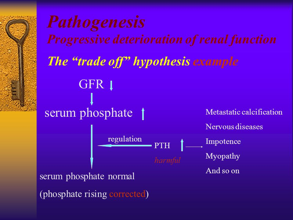 GFR Pathogenesis Progressive deterioration of renal function The trade off hypothesis example serum phosphate serum phosphate normal (phosphate rising corrected) PTH harmful regulation Metastatic calcification Nervous diseases Impotence Myopathy And so on