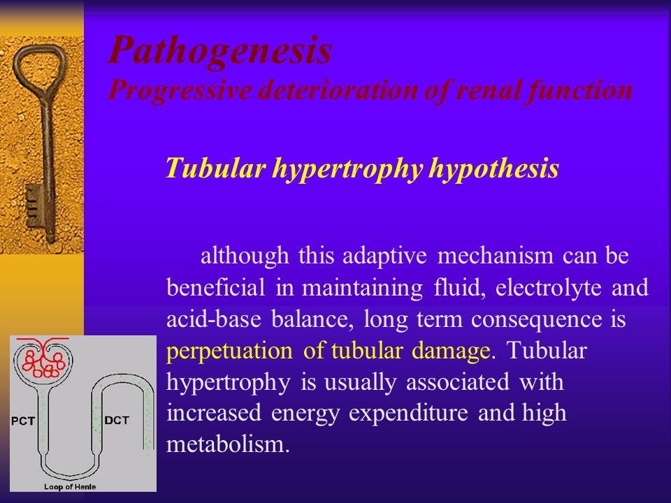 Tubular hypertrophy hypothesis although this adaptive mechanism can be beneficial in maintaining fluid, electrolyte and acid-base balance, long term consequence is perpetuation of tubular damage.