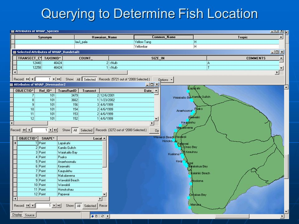 31 Querying to Determine Fish Location