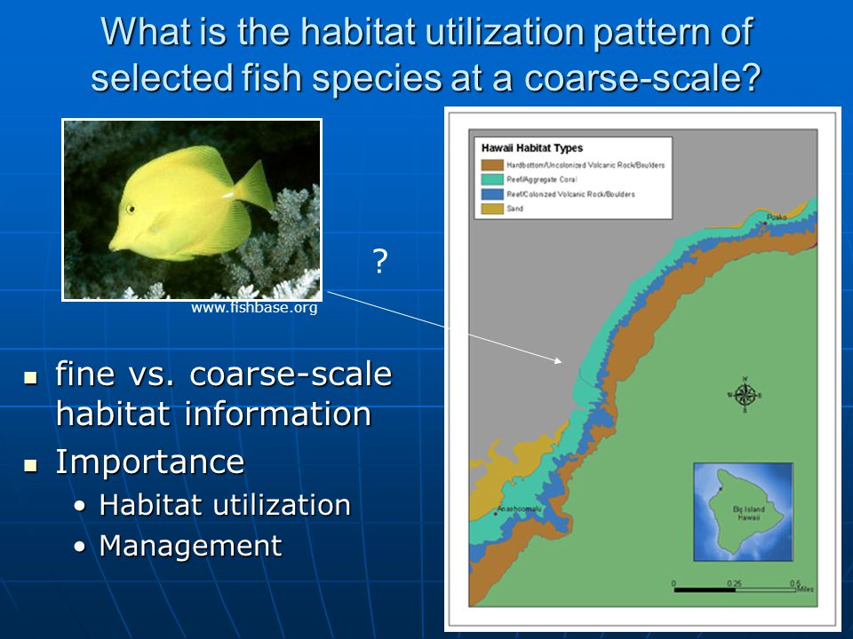50 What is the habitat utilization pattern of selected fish species at a coarse-scale.