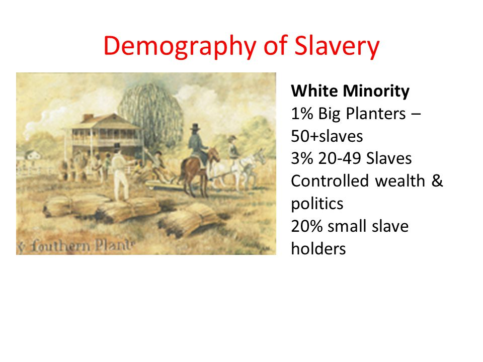 Demography of Slavery White Minority 1% Big Planters – 50+slaves 3% 20-49 Slaves Controlled wealth & politics 20% small slave holders
