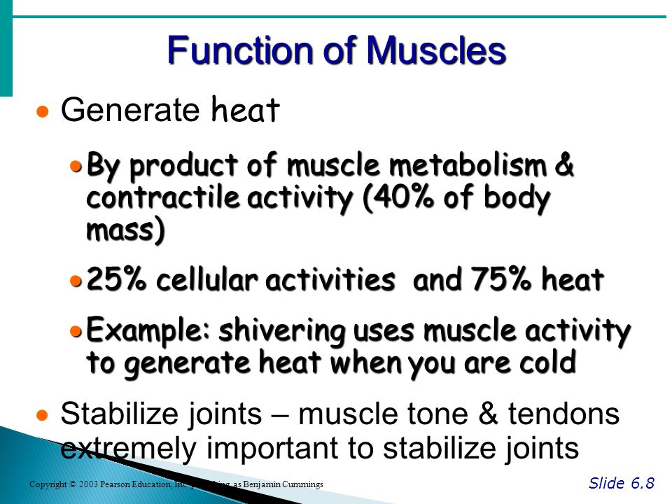 Function of Muscles Slide 6.8 Copyright © 2003 Pearson Education, Inc.