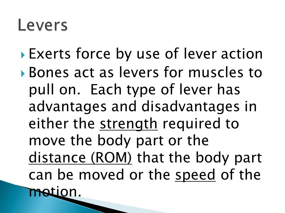  Exerts force by use of lever action  Bones act as levers for muscles to pull on.