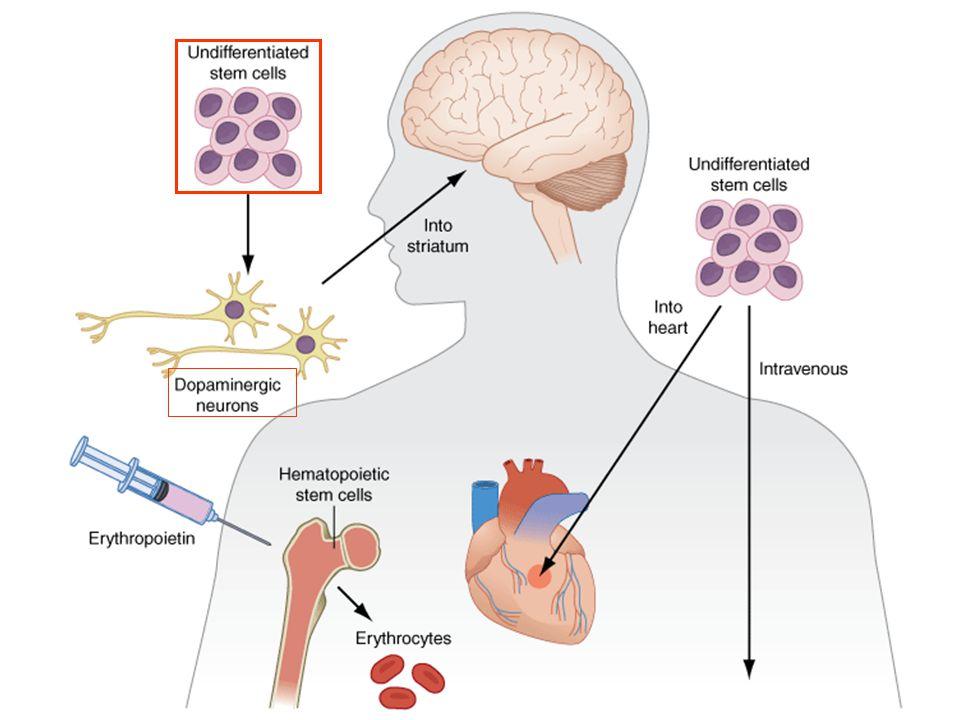 Comparison of levodopa + benserazide, levodopa + benserazide + selegiline and bromocriptine on progression of PD symptoms