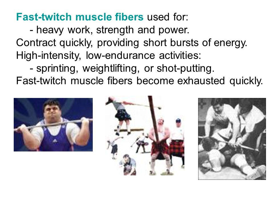 Fast-twitch muscle fibers used for: - heavy work, strength and power. Contract quickly, providing short bursts of energy. High-intensity, low-enduranc