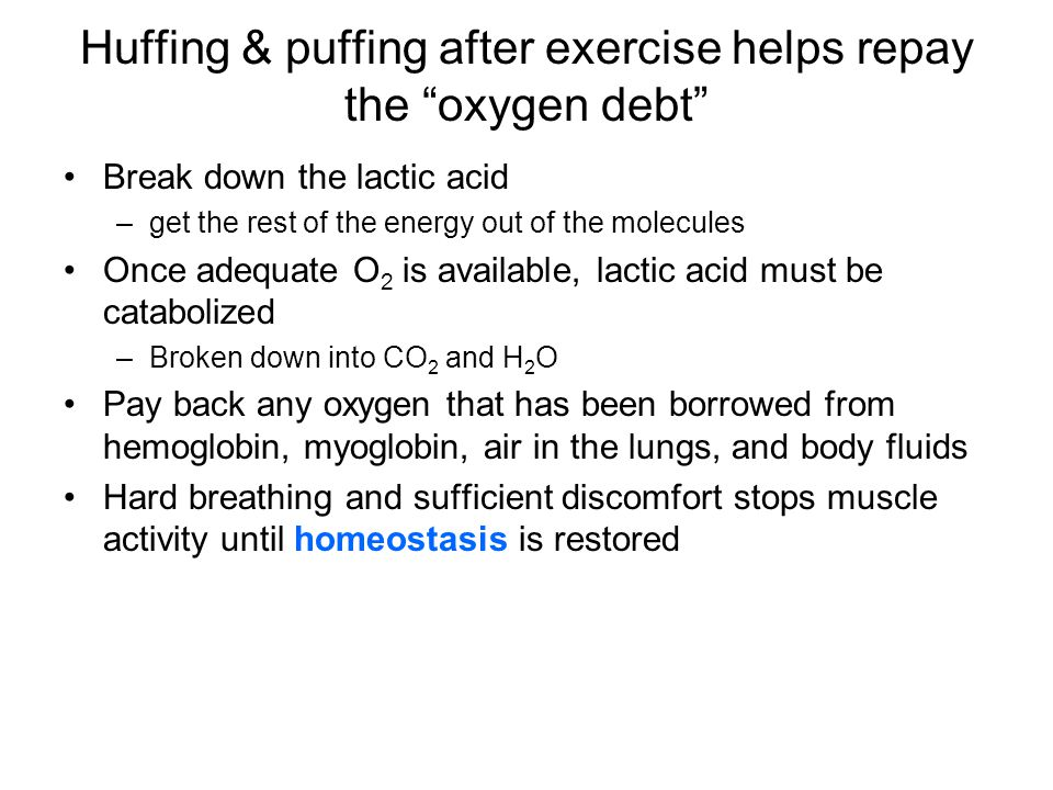 "Huffing & puffing after exercise helps repay the ""oxygen debt"" Break down the lactic acid –get the rest of the energy out of the molecules Once adequa"
