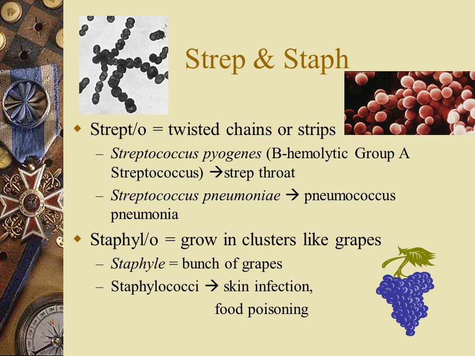 Strep & Staph  Strept/o = twisted chains or strips – Streptococcus pyogenes (B-hemolytic Group A Streptococcus)  strep throat – Streptococcus pneumo