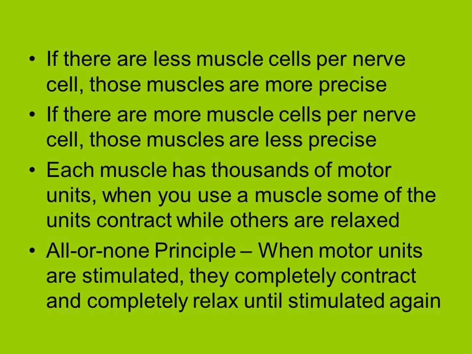 If there are less muscle cells per nerve cell, those muscles are more precise If there are more muscle cells per nerve cell, those muscles are less pr