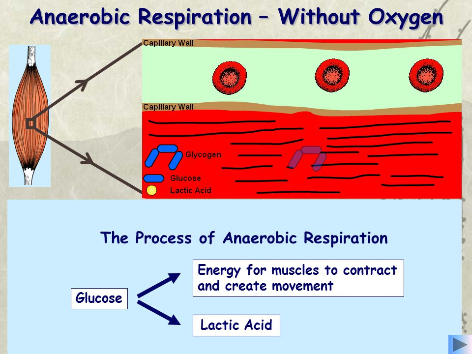 Anaerobic respiration involves the release of a little energy, very quickly from the incomplete breakdown of glucose without using oxygen, inside the