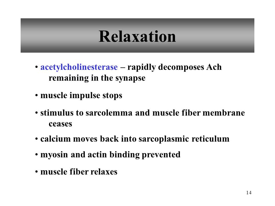 14 Relaxation acetylcholinesterase – rapidly decomposes Ach remaining in the synapse muscle impulse stops stimulus to sarcolemma and muscle fiber membrane ceases calcium moves back into sarcoplasmic reticulum myosin and actin binding prevented muscle fiber relaxes