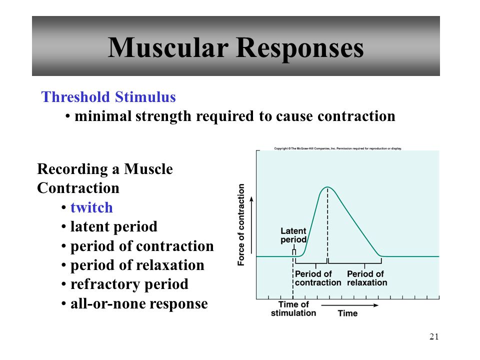 21 Muscular Responses Threshold Stimulus minimal strength required to cause contraction Recording a Muscle Contraction twitch latent period period of contraction period of relaxation refractory period all-or-none response