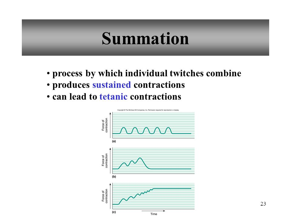 23 Summation process by which individual twitches combine produces sustained contractions can lead to tetanic contractions