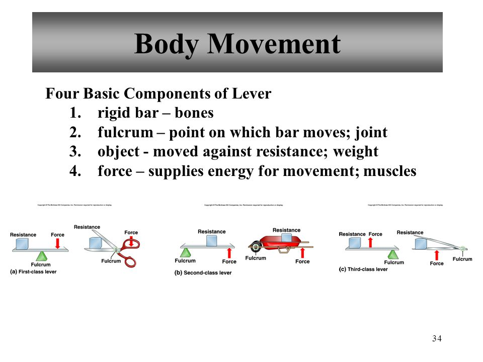 34 Body Movement Four Basic Components of Lever 1.
