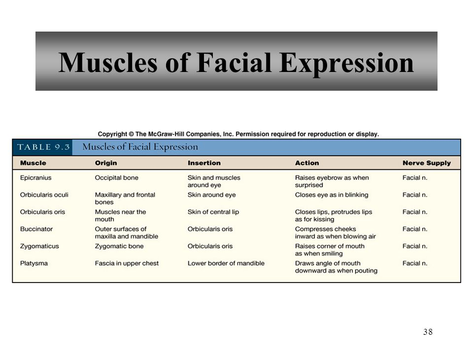 38 Muscles of Facial Expression