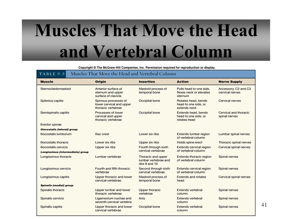 41 Muscles That Move the Head and Vertebral Column