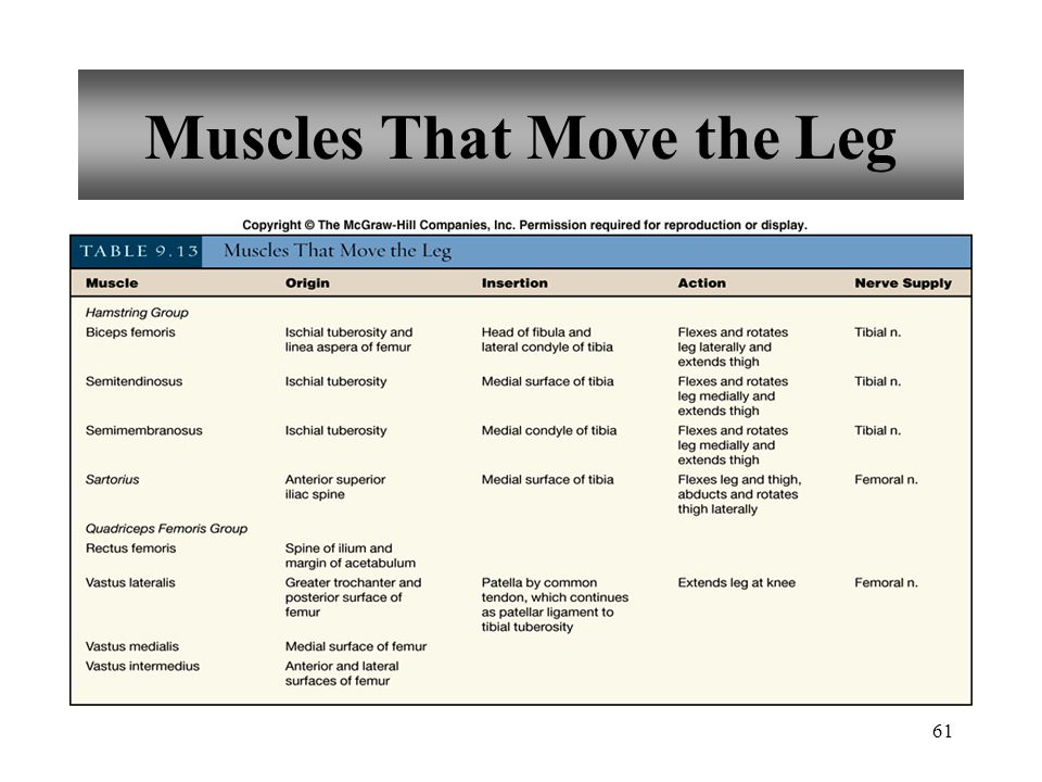 61 Muscles That Move the Leg