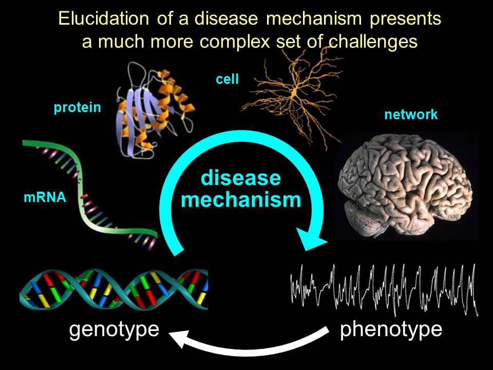 genotypephenotype mechanism disease Elucidation of a disease mechanism presents a much more complex set of challenges mRNA protein cell network