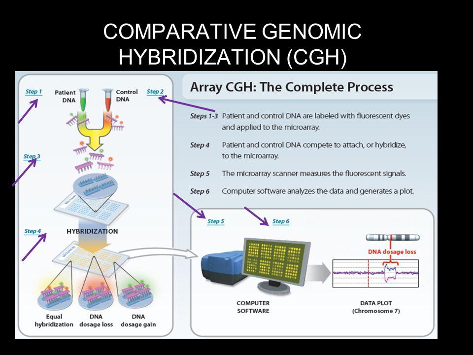 COMPARATIVE GENOMIC HYBRIDIZATION (CGH)